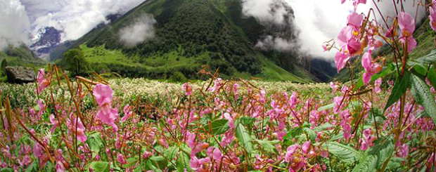 Trekking in Valley of Flowers,Trek Uttarakhand,Treks Trekking Packages