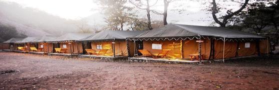 Cradle of Life Jungle Swiss Camp