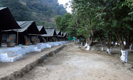 Camp Treepie